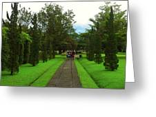 Green Pathway  Greeting Card
