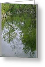 Green Peace - Trees Reflection Greeting Card