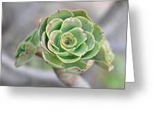 Green Petals Greeting Card