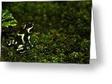 Green Poison Dart Frog Greeting Card