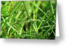 Green Rain Greeting Card
