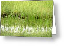 Green Reflections Greeting Card