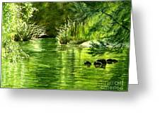 Green Reflections With Sunlit Grass Greeting Card