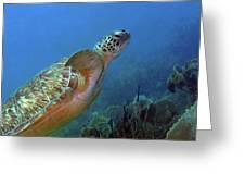 Green Sea Turtle 4 Greeting Card