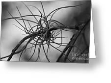 Green Spider Greeting Card