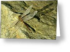 Green Spotted Dragonfly 1 Greeting Card
