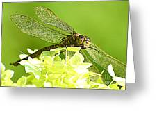 Green Spotted Dragonfly 2 Greeting Card