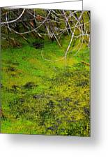 Green Spring Soup Greeting Card