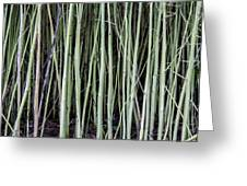 Green Sticks Greeting Card
