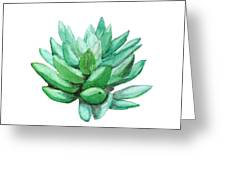Green Succulent  Greeting Card