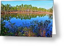 Green Swamp In December Greeting Card