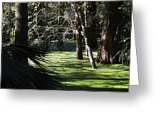 Green Swamp Near Camps Canal Greeting Card