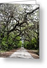 Green Swamp Oak Bower Greeting Card