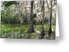 Green Swamp Greeting Card