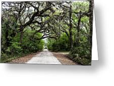 Green Swamp Tunnel Greeting Card
