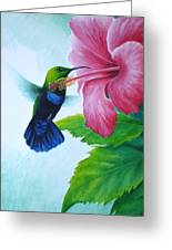 Green-throated Carib And Pink Hibiscus Greeting Card