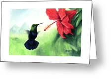 Green-throated Carib Hummingbird And Red Hibiscus Greeting Card