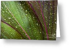 Green Ti Leaves Greeting Card