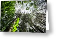 Green To The Sky Greeting Card