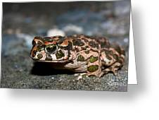 Green Toad Greeting Card
