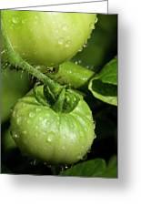 Green Tomatoes Greeting Card