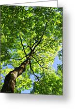 Summer Tree Canopy Greeting Card