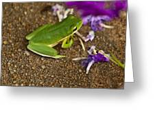Green Tree Frog And Flowers Greeting Card