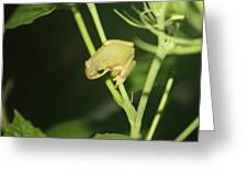 Green Tree Frog On Hibiscus Greeting Card