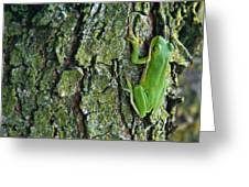 Green Tree Frog On Lichen Covered Bark Greeting Card