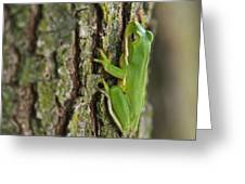 Green Tree Frog Thinking Greeting Card