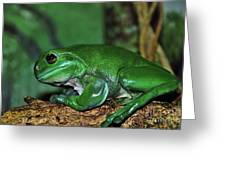 Green Tree Frog With A Smile Greeting Card