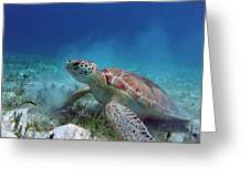 Green Turtle Greeting Card
