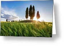 Green Tuscany Greeting Card