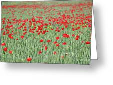Green Wheat And Red Poppy Flowers Field Greeting Card