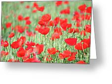 Green Wheat And Red Poppy Flowers Greeting Card