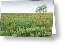 Green Wheat Field Spring Scene Greeting Card