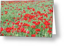 Green Wheat With Poppy Flowers Greeting Card