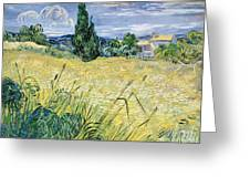 Green Wheatfield With Cypress Greeting Card