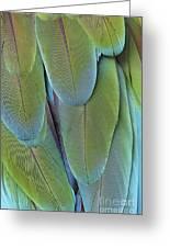 Green-winged Macaw #4 Greeting Card