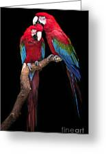 Green Winged Macaw Portrait Greeting Card