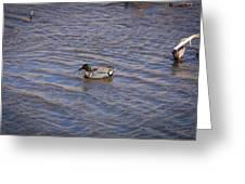 Green-winged Teal 5 Greeting Card