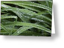 Green With Rain Drops Greeting Card