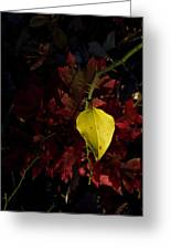 Greenbriar Leaf In Evening Sun Greeting Card