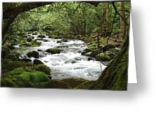 Greenbrier River Scene 2 Greeting Card