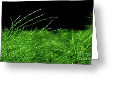 Greener On The Other Side. Greeting Card