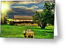 Greener Pastures Greeting Card