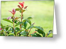 Greenery And Red Greeting Card