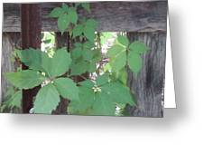 Greenery Greeting Card