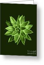 Greenery Succulent Echeveria Agavoides Flower Greeting Card