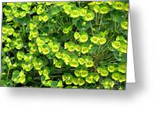 Greens And Yellows Greeting Card